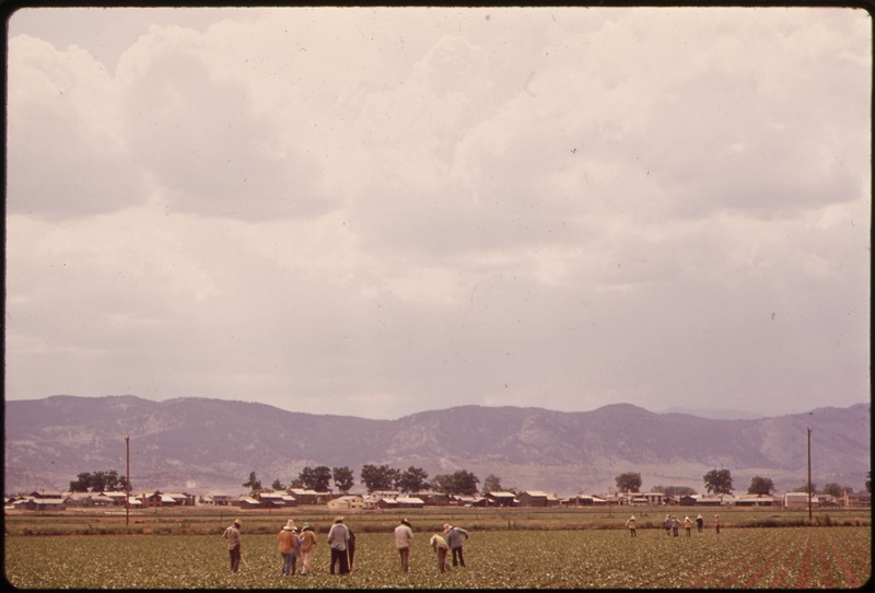 Migrant Workers in California Fields